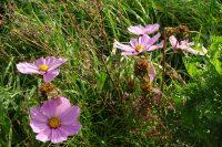 Mooie bloemen langs het pad