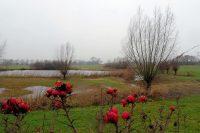 Mooi uitzicht vanachter de rozenbottels